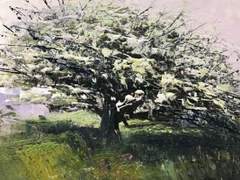 Hawthorn in full bloom, Ding Dog by Rachael Mia Allen
