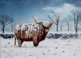 Highland cow by Paul Sims