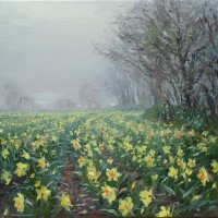 Misty Light and Daffodils, near Ludgvan by Mark Preston