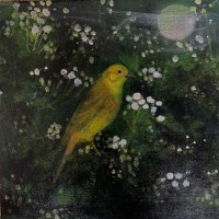 The song of the hawthorn by Catherine Hyde
