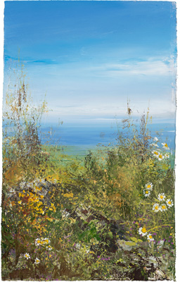 Daisies watch over a summer's day, Zennor by Amanda Hoskin