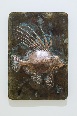 John Dory by Shelley Anderson